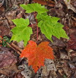 Leaves Partridge Pond Trail 8-15-16-pf.jpg