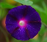 Morning Glory Garden 8-13-16.jpg