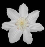 Flower  - Bangor 7-2-13-ed-pf .jpg