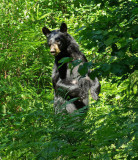 Bear City Forest b 7-10-12-pf.jpg
