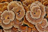 Fungus - Little Moose c 11-13-11-ed-pf.jpg