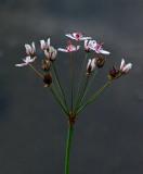 Wildflowers Kenduskeag Stream  8-28-16-pf.jpg