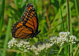 Viceroy City Forest 8-20-12-ed-pf.jpg