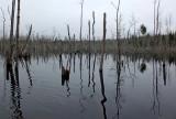 Beaver Pond   Newman Hill-Hinds 11-6-15-pf.jpg
