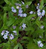 Wildflowers - Stillwater River Trail b  5-17-13-ed-pf.jpg