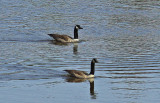 Geese City Forest 4-20-12 pf.jpg