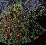 Lichen Perch Pond 9-24-16-pf.jpg