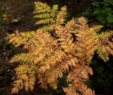 Ferns  Northern Pond 9-25-16-pf.jpg