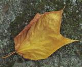 Leaf Hidden Ponds Trail 9-22-16-pf.jpg