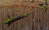 Pond Loop Trail Little Moose  11-13-11ed-pf.jpg