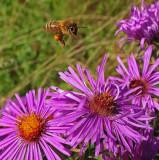 Bee Newman Hill 9-17-15-ed-pf.jpg