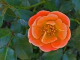 Flower  - Bangor 6-12-13-ed-pf.jpg