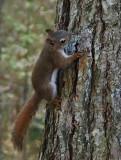 Squirrel - Catherine Mt Trail.9-28-14-ed-pf.jpg
