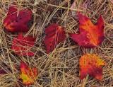 Leaves Branch Lake Trail b 10-12-16-pf.jpg