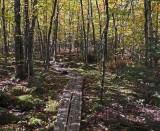 Branch Lake Trail 10-12-16-pf.jpg