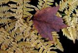 Leaf  - City Forest  10-7-12-ed-pf.jpg