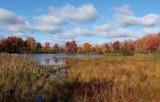 Pine Pond  Newman Hill-Hinds10-14-16-pf.jpg