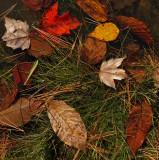Leaves Little River Trail 10-19-16-pf.jpg