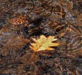 Leaf in Stream Breakneck Rd. 11-3-12ed-pf.jpg