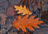 Leaves  in Stream Breakneck Rd.   11-3-12-ed-pf.jpg