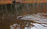 Kelley - Stillwater River Cove 10-26-16-pf.jpg