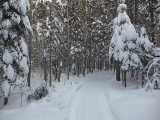 Glenburn Trails 1-2-17.jpg