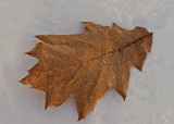 Leaf Paul Bunyan Along Kenduskeag 1-8-17.jpg