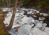 Harbor Brook 1-17-17.jpg