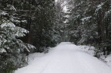 Logan Rd. DeMeritt Forest 1-20-17.jpg