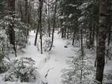 Stream DeMeritt Forest 1-20-17.jpg