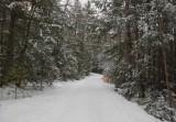 Logan Rd. DeMeritt Forest b 1-20-17.jpg