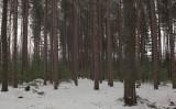 DeMeritt Forest 1-20-17.jpg