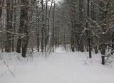Side Trail off Newport- Dover- Foxcroft Trail 2-2-17.jpg