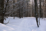 Side Trail 2 off Newport- Dover- Foxcroft Trail 2-2-17.jpg