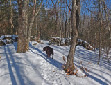 Kelley - N. Headwaters Trail Sheepscot Headwaters 2-4-17.jpg