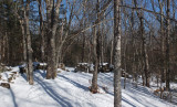 N. Headwaters Trail Sheepscot Headwaters c  2-4-17.jpg