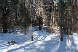 Hemlock Hollow Trail Sheepscot Headwaters 2-4-17.jpg