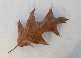 Leaf P. B. Along Kenduskeag 2-6-17.jpg