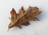 Leaf P. B. Along Kenduskeag b 2-6-17.jpg