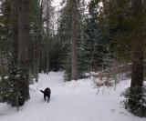 Kelley Glenburn  Trail  2-8-17.jpg