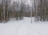 Trail Along Kendusleag 2-15-17.jpg
