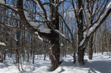 Woods  Side Trail Dover-Foxcroft  2-17-17.jpg