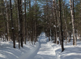 Side Trail Dover-Foxcroft  c 2-17-17.jpg
