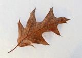Leaf P. B. Along Kenduskeag 2-6-17 -pf.jpg