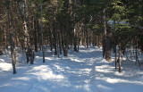 Glenburn Snowmobile  Trail  2-21-17.jpg