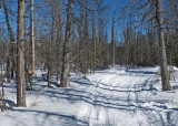Glenburn Snowmobile  Trail  c 2-21-17.jpg