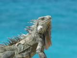 Bonaire 2014 - snorkeling and birding