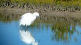 Birding in Texas 2014