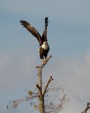 Eagle Launch.jpg