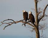 Eagle Call.jpg